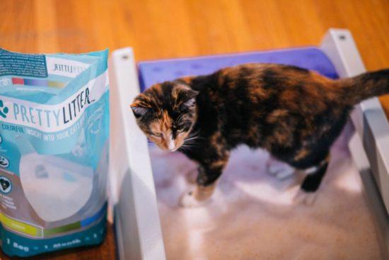 cat-in-litter-box