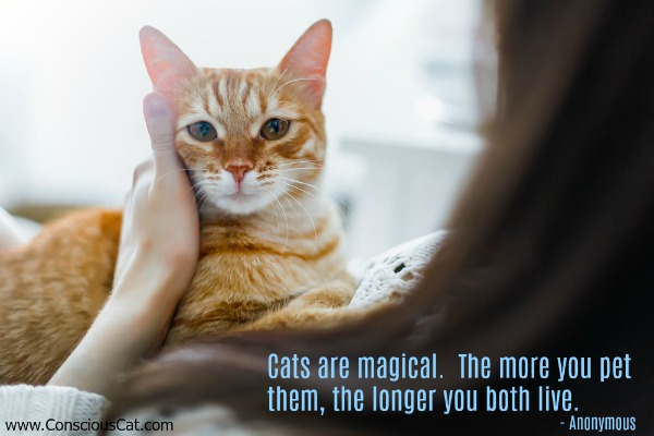 magical-cats