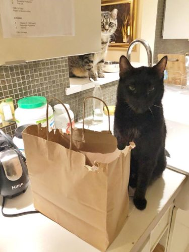 cat-chewing-paper-bag