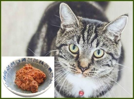 big-bear-pet-cat-food