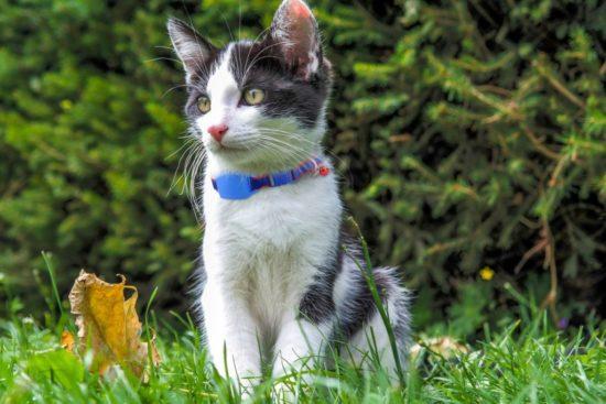 tail-it-gps-tracker-cat