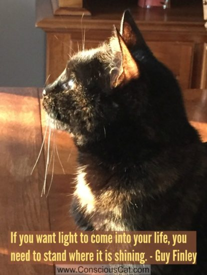 tortoiseshell-cat-light