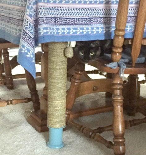 cat-under-tablecloth