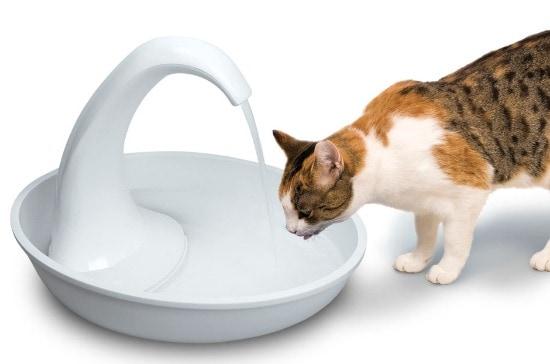 Swan_White_Cat-fountain