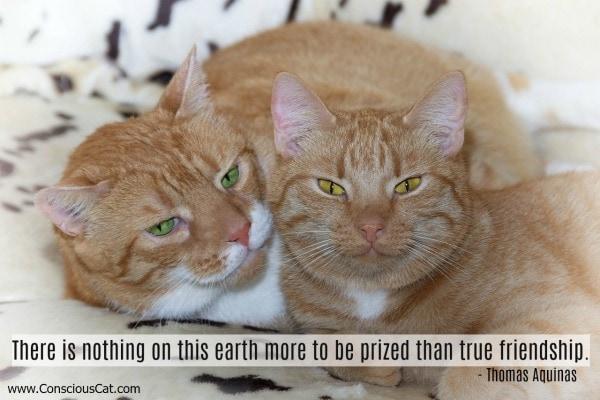 Cat friendship quotes සඳහා පින්තුර ප්රතිඵල