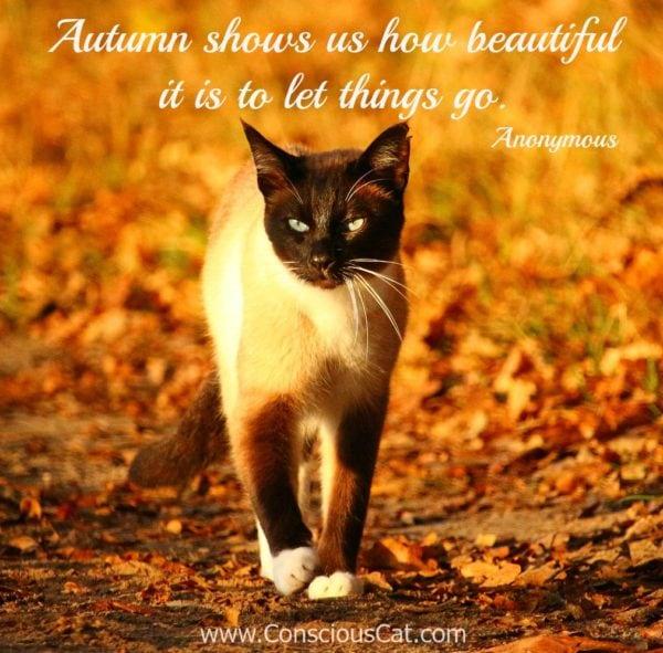 cat-autumn