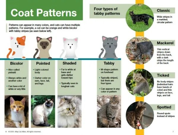 cat-coat-patterns