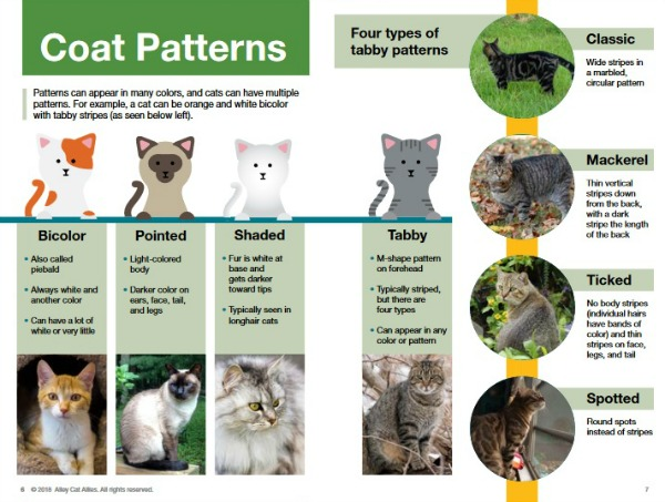 cat-coat-patterns