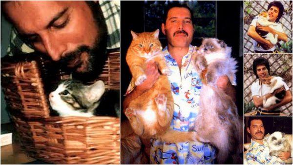 Freddie-Mercury-cats