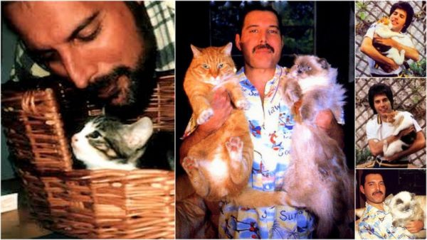 Freddie Mercury Was The Ultimate Cat Guy The Conscious Cat