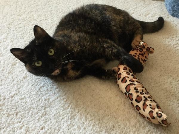 Leopard-Kick-Stick