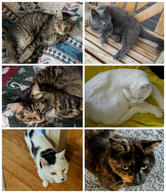 1tdc-success-stories-cats