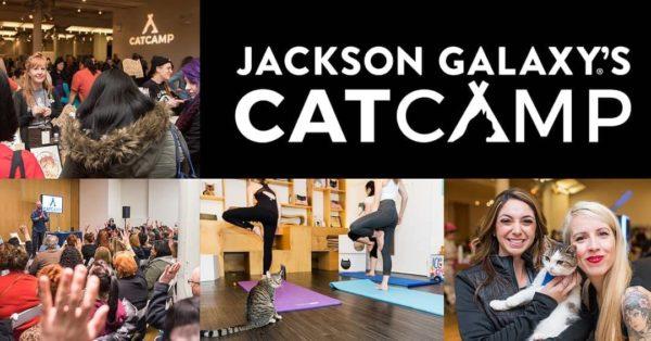 Cat-Camp-NYC-2019
