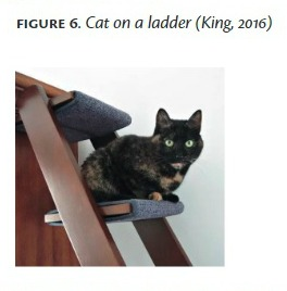 cat-ladder-math-paper