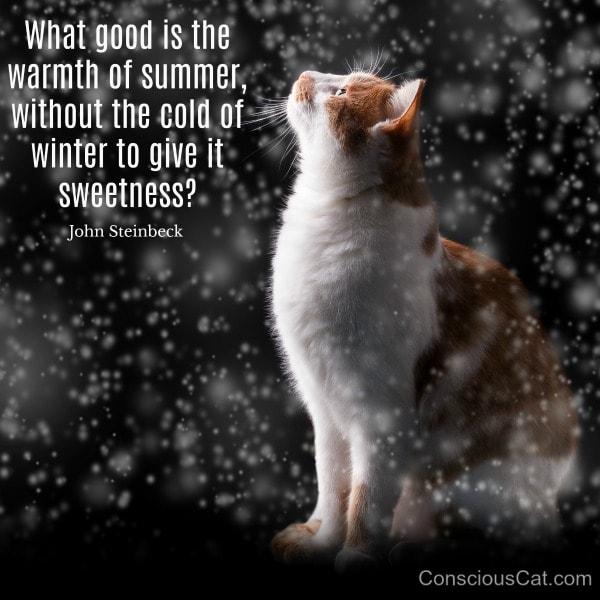 cat-snowflakes