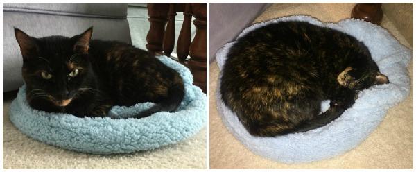 cat-blanket-bed