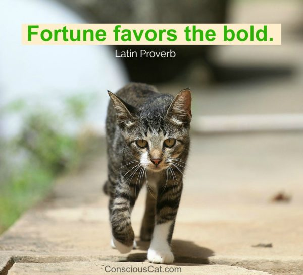 fortune-favors-the-bold