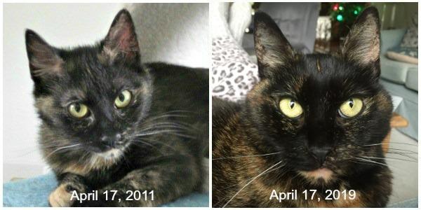 Ruby-8th-adoption-anniversary