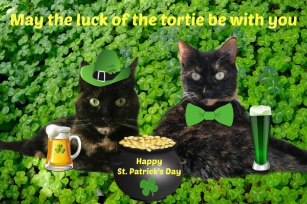 st -patricks-day-cats