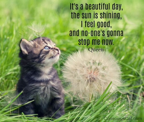 Sunday Quotes Its A Beautiful Day The Conscious Cat