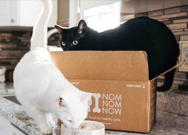 nomnomnow-fresh-food-for-cats