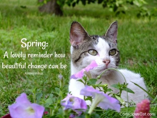 cat-spring-flowers