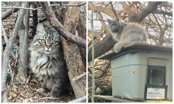tnr-community-cats