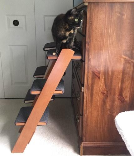 cat-ladder