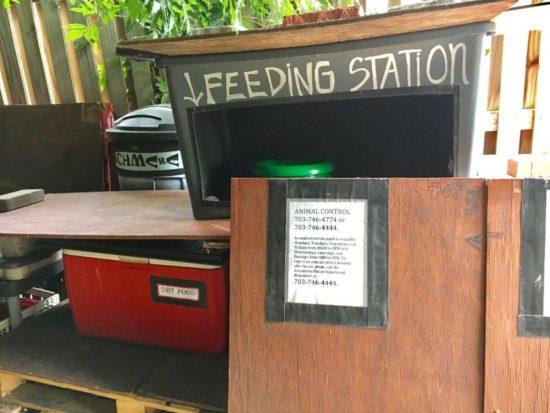 feral-cat-feeding-station