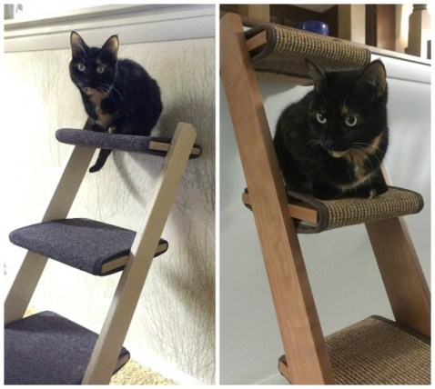 cat-ladder-feline-furniture
