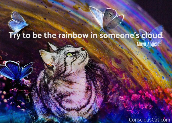 cat-rainbow-painting