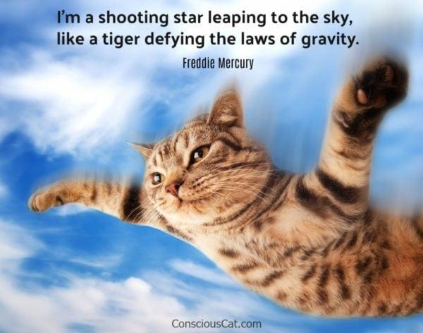 cat-flying