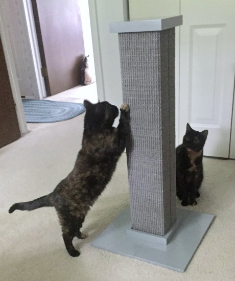 cats-scratching post