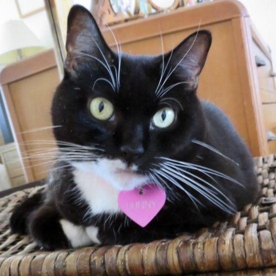bunny-bloom-tuxedo-cat