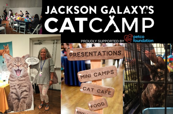 cat-camp-nyc