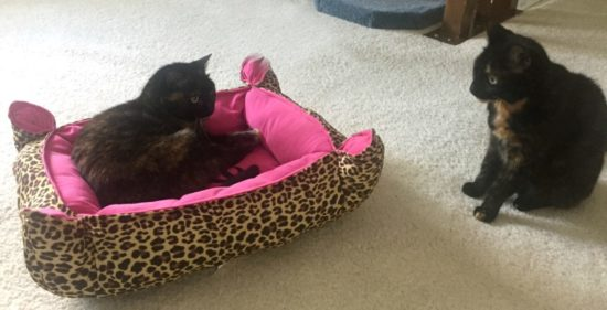 tortoiseshell-cats-leopard-print-cat-bed