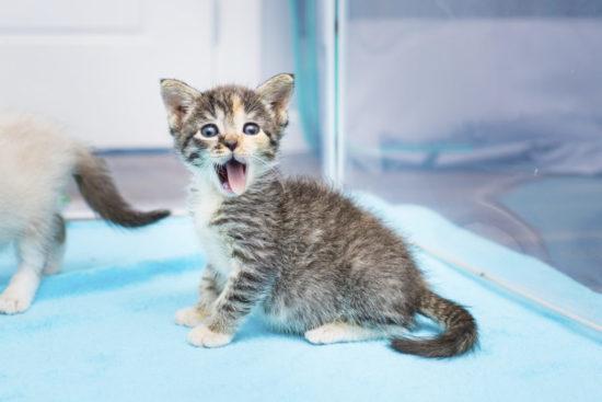 tiny-but-mighty-kitten