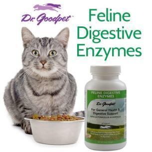 feline_digestive_enzymes_probiotic