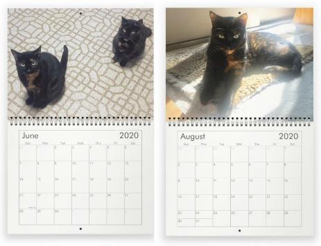 consciouscat-cat-wall-calendar