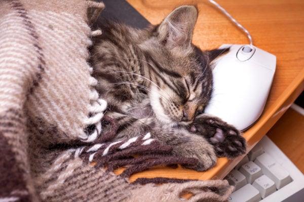 cat-sleeping-computer