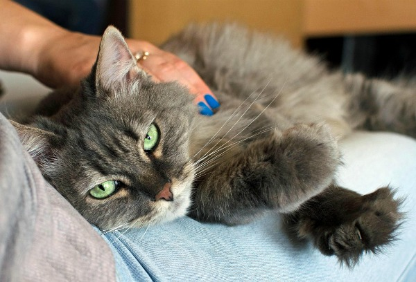 cat-human-bond