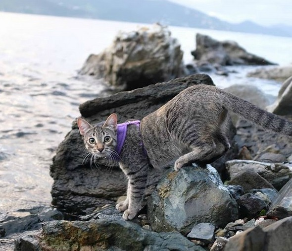 gracie-adventure-cat