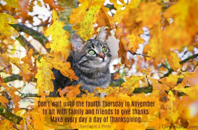 november-quote-thankful