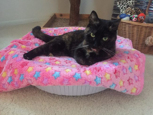 Ruby-blanket