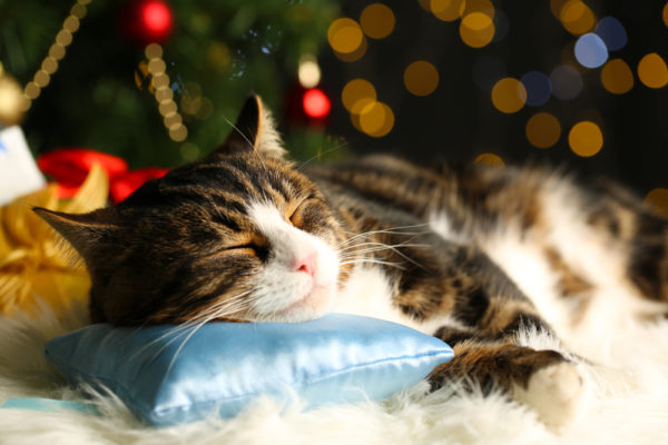 cat-christmas-tree-sleeping