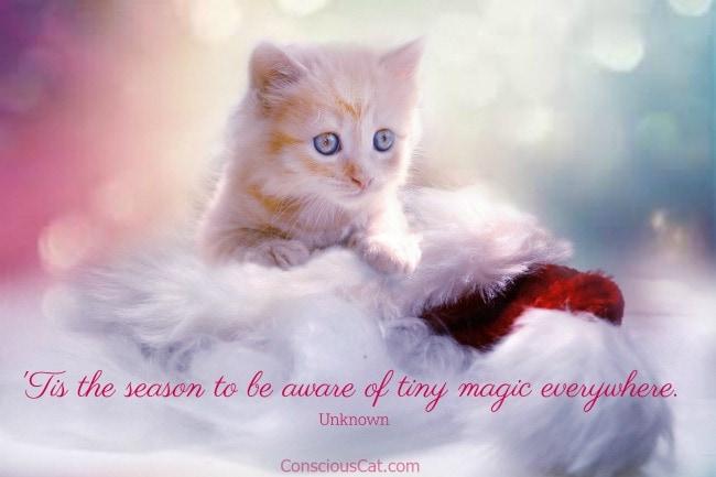 tiny-kitten-magic