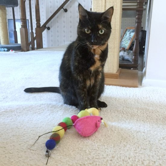 tortoiseshell-cat-toys