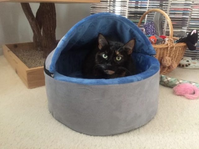 hooded-cat-bed