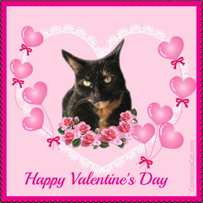valentines-day-tortoiseshell-cat