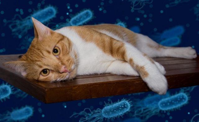bacteria-cat